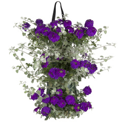 Mix Verbena – Helichrysum