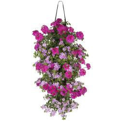 Mix Verbena-Bacopa/Helichrysum